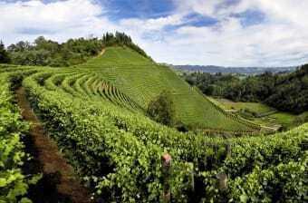 Fate un giro nei vigneti del Piemonte